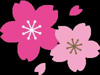HANSHINはいつ桜は咲くのだろう??